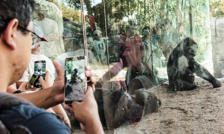 动物园的未来,就是没有动物园 ?