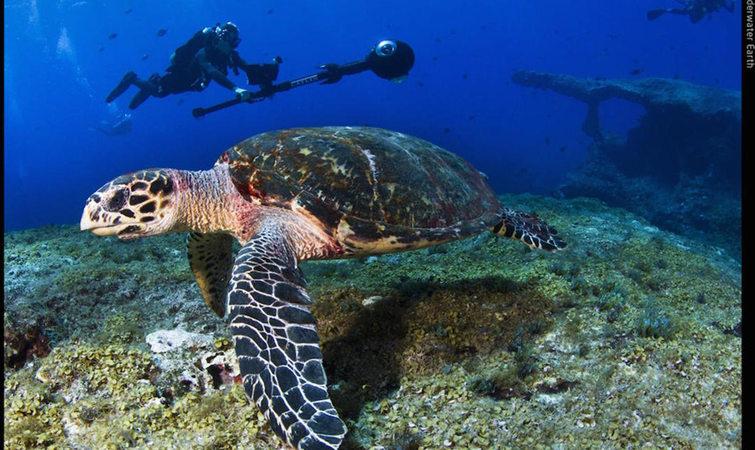 top 15 街景 珊瑚礁 巴西 海底世界 旅行 google 分享至: 59