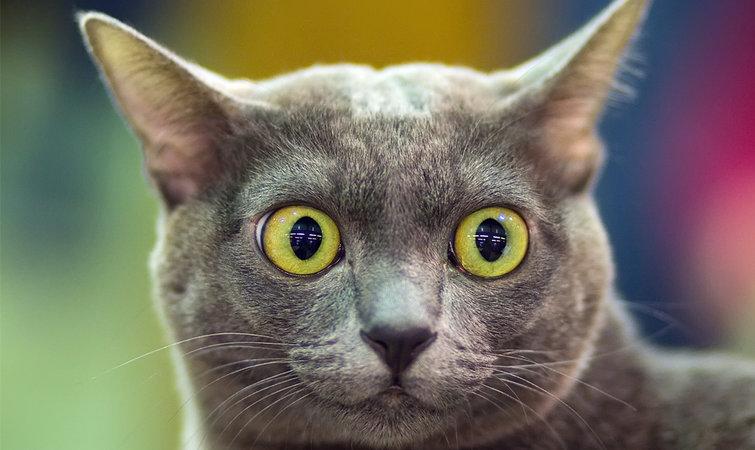 苹果可爱猫猫壁纸
