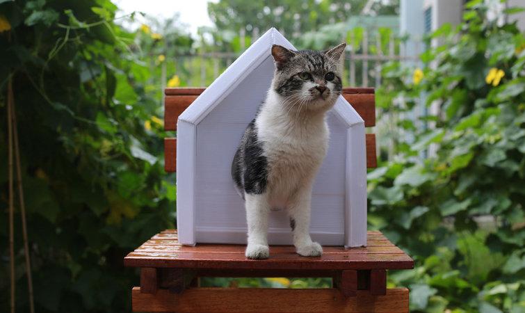 用纸箱做小猫房子步骤