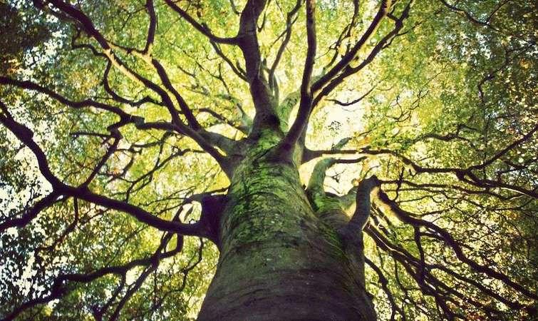科学家们一直尝试在生命树上添加新物种,但他们面临着一个艰巨的挑战:对于绝大多数单细胞有机体,他们不知道如何在实验室里将其培养出来。 一些研究人员已经研发出一种方法来解决这一问题,那就是从生态环境中提取 DNA 片段,并将它们拼凑在一起。 近年来,美国加州大学伯克利分校的吉利恩F班菲尔德(Jillian F.