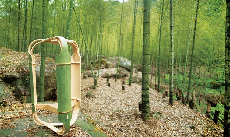 竹子微信风景头像
