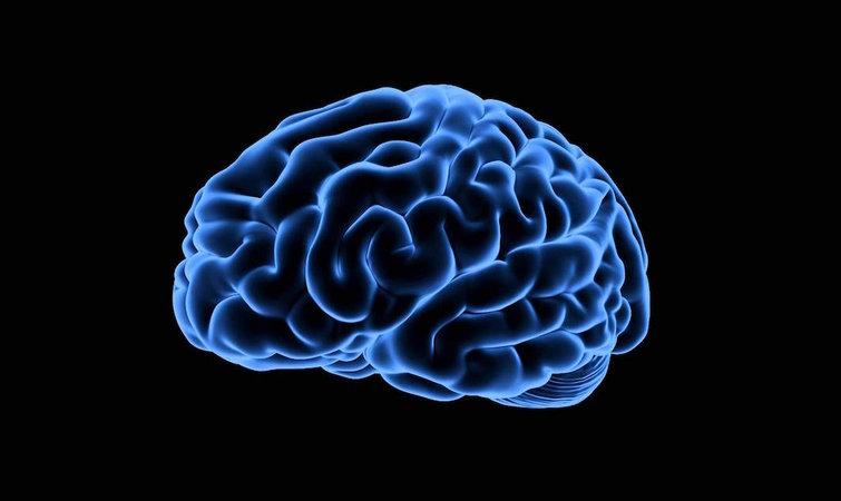 医学生脑部手绘图