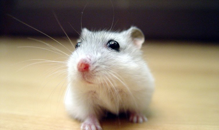 矿泉水瓶手工制作捕鼠