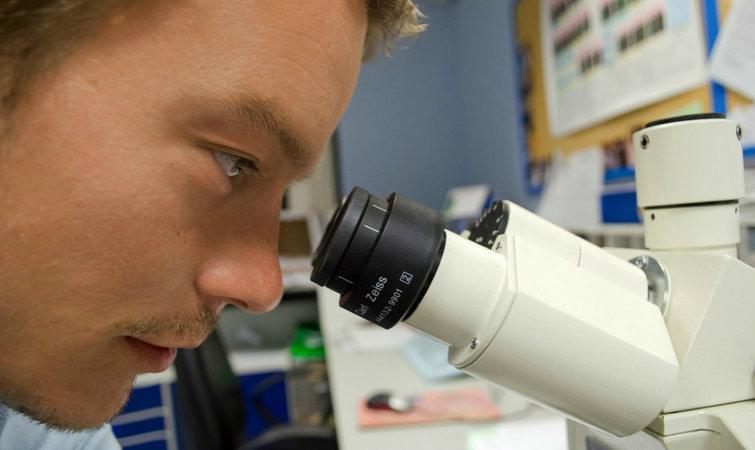 实验室培养人造器官,加州大学做了个细胞生长框架