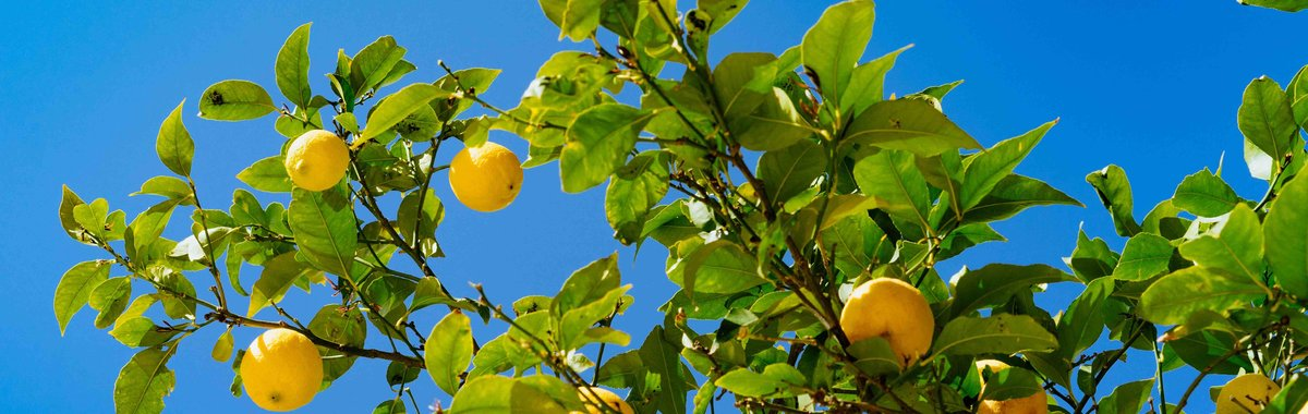 柠檬国际市场的扩张,如何导致西西里岛黑手党的崛起?
