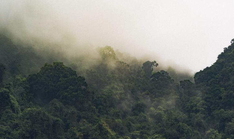 空旷的越南森林,谁来阻止野生动物的灭绝?