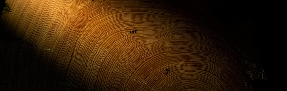 藏在樹木里的隱秘歷史,那些年輪可以告訴人類多少信息?
