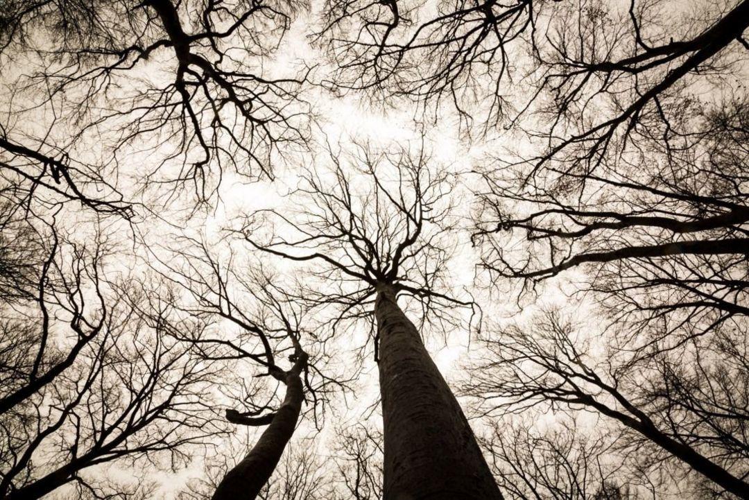 树木会学习和记忆,能照顾周围生病的同伴,真的吗?_文化_好奇心日报