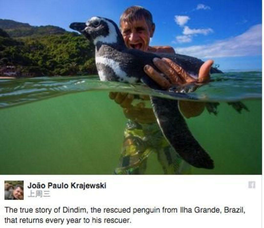 「这世界」企鹅对救命恩人念念不忘?人类的YY被拆穿了_文化_好奇心日报