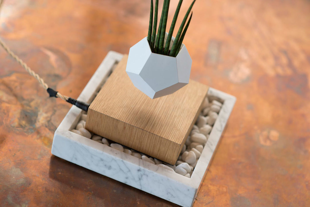 你家的小型植物,这样养会看起来无与伦比_设计_好奇心日报