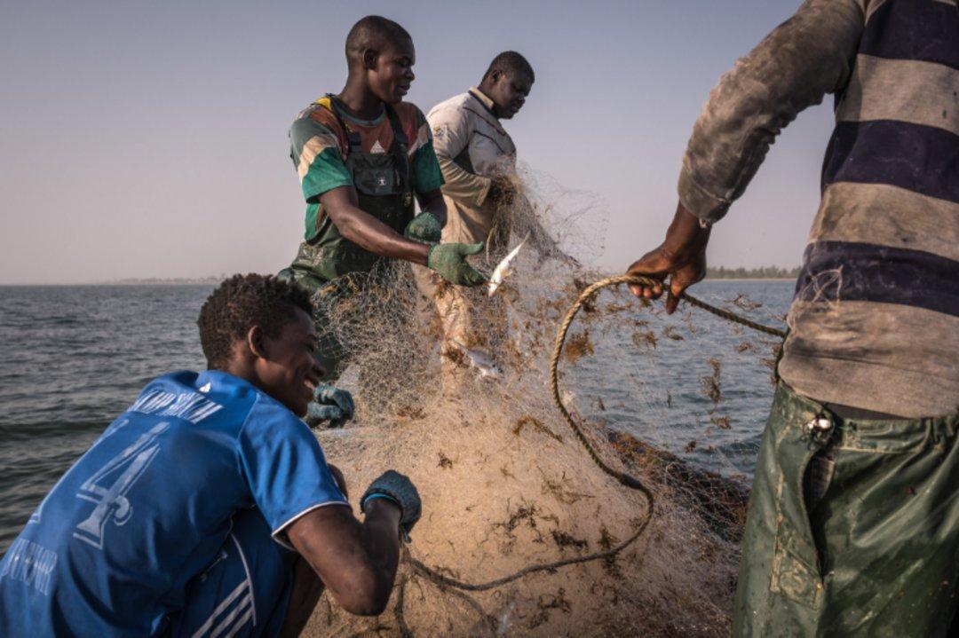 中国人消耗了全世界三分之一的鱼,过度捕捞正在危及其他地区的生活_文化_好奇心日报