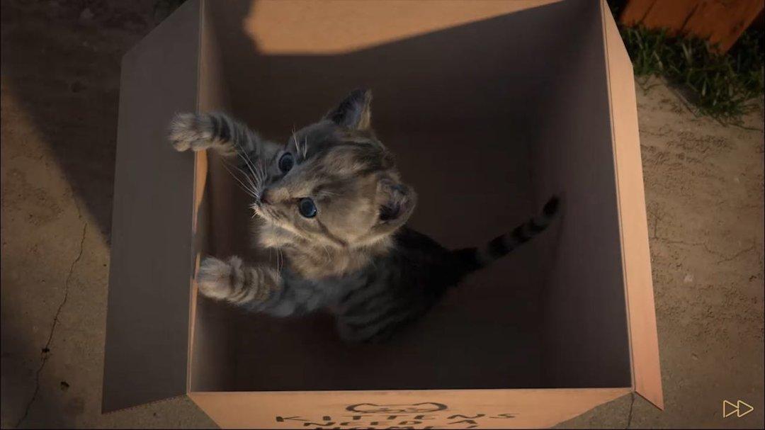 全世界的小猫咪,我最喜欢这一只_智能_好奇心日报