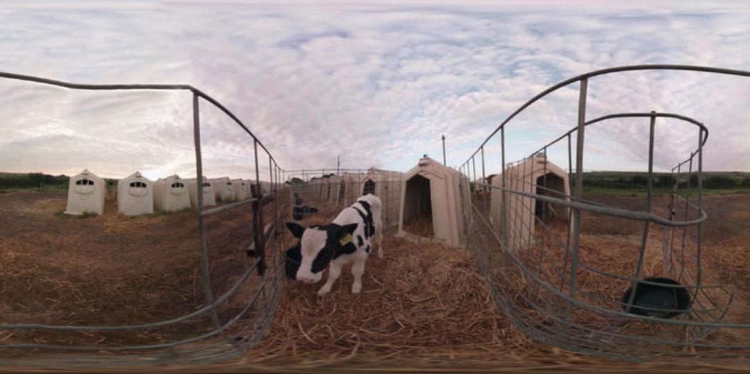 动物保护组织出新招,虚拟现实让你感受动物受到的虐待_智能_好奇心日报