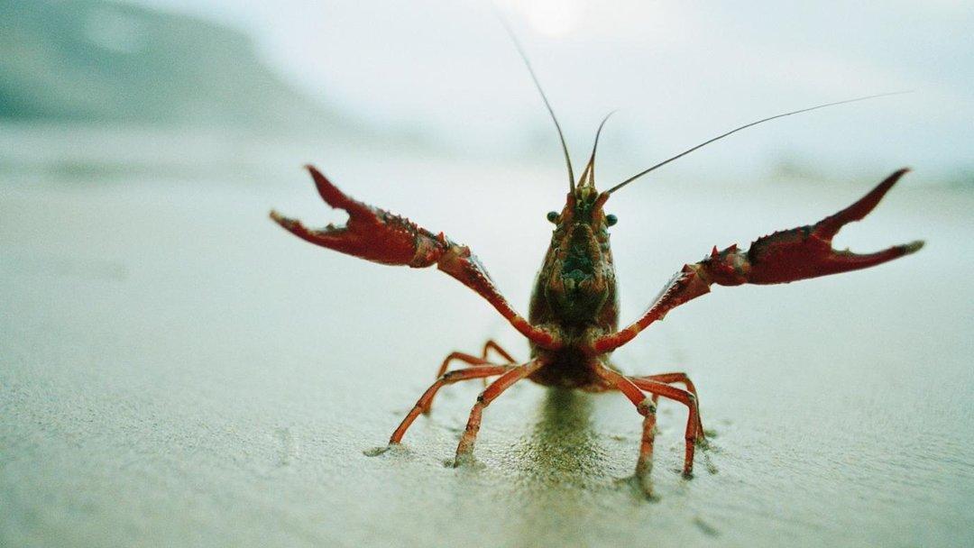 小龙虾卖得越来越贵,这个生意里,到底是谁在抬价?_商业_好奇心日报