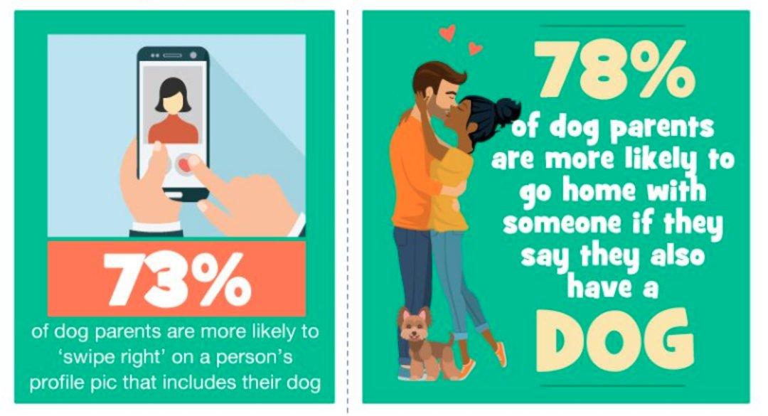 据说如果恋爱对象有宠物,如何对待它们可能也是一门学问_娱乐_好奇心日报